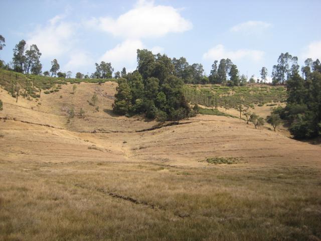 ニルギリの草地