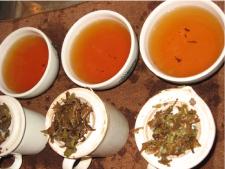 tasting nepal1